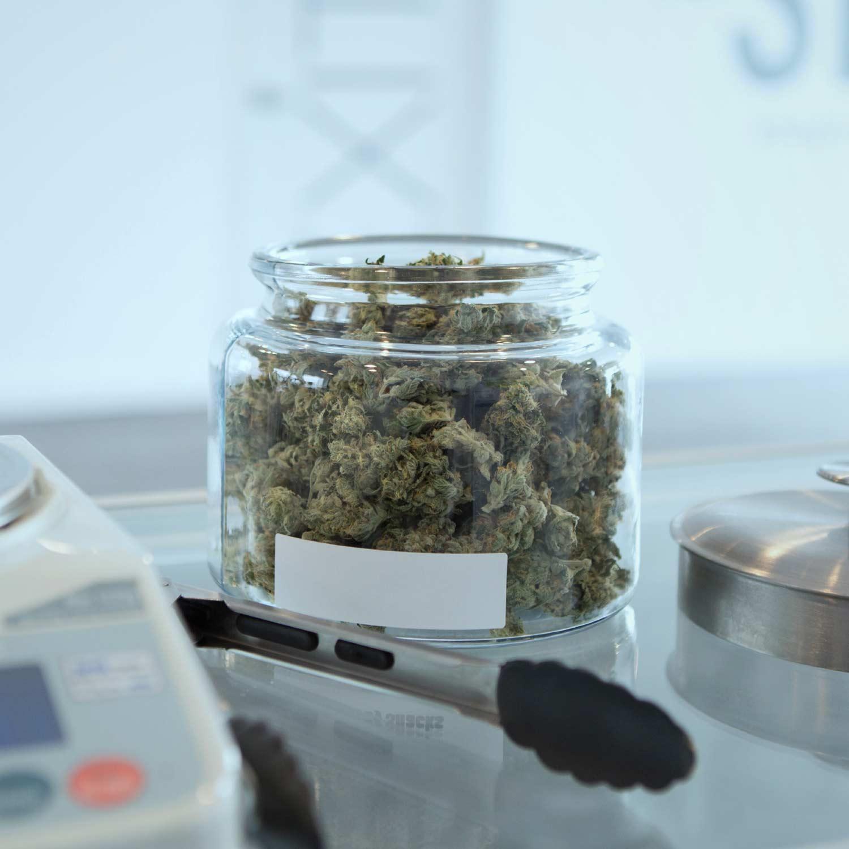 Vivamus sodales condimentum eros from weed